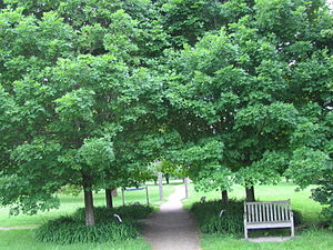 University of Guelph Arboretum - General view of the World of Trees