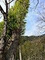 Wuyishan, Nanping, Fujian, China - panoramio.jpg