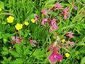 XN Meadow wet 01.jpg