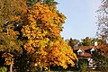 Zelta rudens.Golden autumn - Guntars Mednis - Panoramio (2).jpg