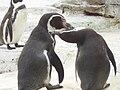 Zoo am Meer 2008 PD 37.JPG