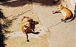 Zoo de Lisboa by Juntas 82.jpg