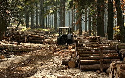 Zrywka drewna 7834