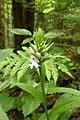 """""""Orchideen-Knospe"""".jpg"""