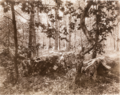 'FONTAINEBLEAU', 1925.PNG