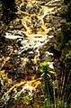 Águas da Cachoeira da Fumaça.jpg