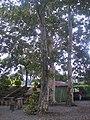 Árboles en Parque Río del Norte del Río Orizaba.jpg