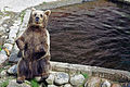 Ähtärin karhut 20.jpg