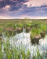 Бондарівське болото навесні.jpg