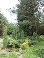 Ботанічний сад ДНУ 29.JPG