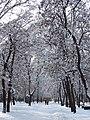 В зимовому парку.jpg