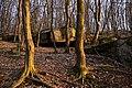 Грабовий ліс навколо каменя Коцюбинського P1110724.jpg