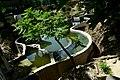 Київський зоопарк DSC 0248.jpg