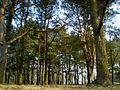 Лес - panoramio (31).jpg