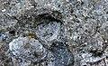 Непран Вячеслав, Осинівські піщаники, геологічна Пам'ятка природи, 44-233-5002, 49°33'14.4N 39°04'09.7E (2).jpg