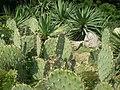 Нікітінський ботанічний сад в Ялті.jpg