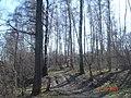 Около истринского водохранилища - panoramio.jpg