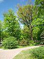 Полтава Петровский парк 5.JPG