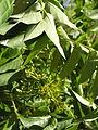 Растения в Седово 194.JPG