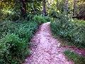 Стежка у парку - panoramio (1).jpg