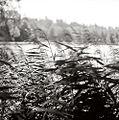 Сумское-озеро.jpg