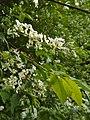 Цветущие сады в Сергиевке.jpg