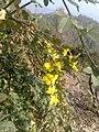 जाई फूल.jpg