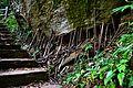 ทางขึ้นไปชมน้ำตกที่วนอุทยานนายูง-น้ำโสม เห็นมีซี่ไม้ค้ำก้อนหินอยู่ - panoramio.jpg
