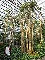 南山植物园-温室景色2 - panoramio.jpg