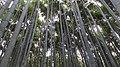 岚山 - panoramio (3).jpg