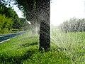 未央 渭河城市运动公园河堤路上的浇灌 05.jpg