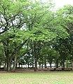 海老名運動公園 - panoramio.jpg