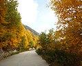 金色盘山路 - Golden Road - 2012.09 - panoramio.jpg