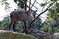 飯田市立動物園にて 2014.9.10 - panoramio.jpg