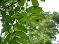 ... caterpillar (9583454546).jpg