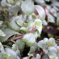 0.2014 Garten im Dezember-Blumen, Sanok..JPG