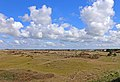 00 2944 Texel Landscape.jpg