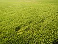 03790jfPaddy fields grasslands village Baliuag Bulacan Candaba Pampanga Bridge Roadfvf 11.JPG