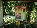 05704jfMidyear Orchid Plants Shows Quezon Cityfvf 32.JPG