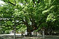 140712 Oasahiko-jinja Naruto Tokushima pref Japan13s3.jpg