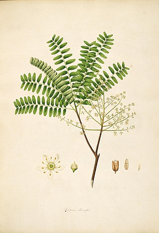 18th century illustration flora of the coast of Coromandel Coast India Plants Fruits Flowers (25).jpg