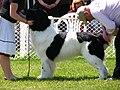 2009 Saanichton Dog Show.jpg