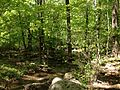 2013-05-12 10 19 52 View down a small stream from the MacEvoy Trail in Ramapo Mountain State Forest.jpg