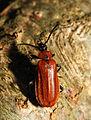 2013-06-09 15-42-11-coleoptera.JPG