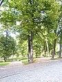 2014-08-18 Turku 31.jpg