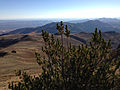 2014-10-09 08 58 44 Limber Pine near 9400 feet on the western slopes of Granite Peak in Humboldt County, Nevada.JPG