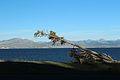 2014 Yellowstone Lake 34.JPG