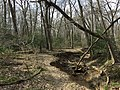 2016-03-01 14 31 19 A trail alongside a severely eroded tributary of Little Difficult Run within Fred Crabtree Park in Reston, Fairfax County, Virginia.jpg