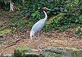 2016 Singapur, Jurong Bird Park (026).jpg