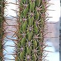 2806 cactus.jpg